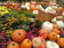 En grupp av pumpor vid halloween Arkivfoton