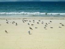 En grupp av seagullen på stranden Arkivbilder