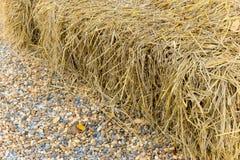 En grupp av sugrör på jordningen Royaltyfri Bild
