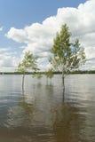 En grupp av träd i vattnet Arkivbild