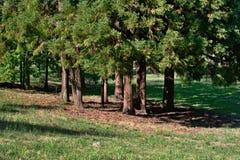En grupp av träd med stammar och skugga royaltyfria foton