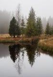 En grupp av träd som framme står av en liten sjö inom en hed Arkivbild