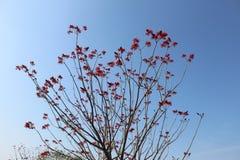 En grupp av unika röda blommor som hänger på ett träd royaltyfria bilder