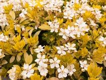 En grupp av vita blommor som är blandade med guling, blommar för att skapa ett b Royaltyfria Bilder