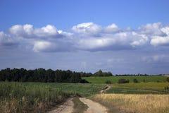 En grusväg i ett fält bland det mogna vetet, solrosorna och cornAgrusvägen i ett fält bland det mogna vetet, solrosorna och havre royaltyfri foto
