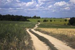 En grusväg i ett fält bland det mogna vetet, solrosorna och havren arkivbilder