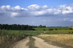 En grusväg i ett fält bland det mogna vetet, solrosorna och havren royaltyfri foto