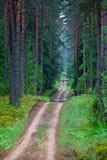 En grusväg i en grön prydlig forestn Royaltyfri Fotografi