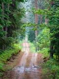En grusväg i en grön prydlig forestn Royaltyfria Foton