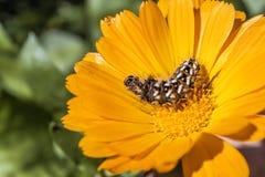 en gul blomma fotografering för bildbyråer