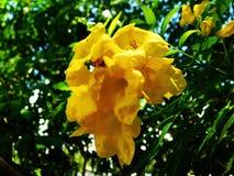 en gul blomma Royaltyfria Foton