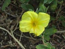 en gul blomma Arkivfoto