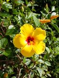 En gul blomma med en lång flik arkivfoto