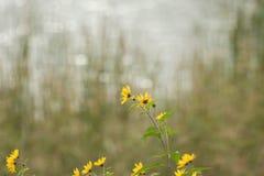 En gul blomma med mjuk bokeh royaltyfri bild