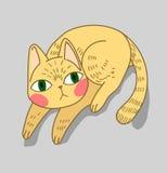 En gul katt Arkivfoto