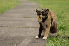 En gul katt med hennes tunga ut Royaltyfria Bilder