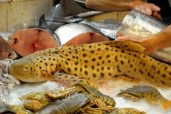 En gul Nursehound fisk med svarta fläckar Royaltyfri Fotografi