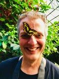 En gul rispapperfjärilslandning på en mans näsa royaltyfria bilder