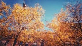 En guld- höst är upplyst i Brooklyn Heights, NYC - NEW YORK - NEDGÅNGEN arkivbild