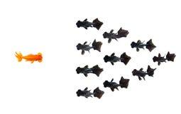 En guldfisk att konfrontera gruppen av den lilla svarta guldfisken som isoleras på vit bakgrund, föreställer kurage eller idén av fotografering för bildbyråer