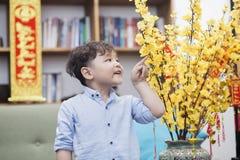 En gullig asiatisk pojke vid aprikosblomman fotografering för bildbyråer