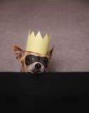 En gullig chihuahua med en maskering och en krona på Arkivfoton