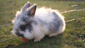 En gullig kanin i en trädgård lager videofilmer