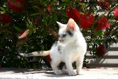 En gullig kattunge arkivfoton