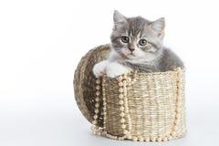 En gullig kattunge i en liten korg Fotografering för Bildbyråer