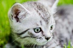 En gullig kattunge lär att ta de första oberoende momenten Arkivbild