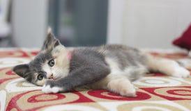 En gullig kattunge som sover på en röd soffa Royaltyfria Bilder