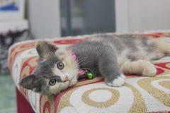 En gullig kattunge som sover på en röd soffa Royaltyfri Bild