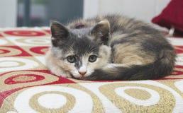 En gullig kattunge som sover på en röd soffa Fotografering för Bildbyråer