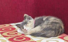 En gullig kattunge som sover på en röd soffa Royaltyfria Foton