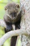 En gullig ung fisher i träd Royaltyfri Bild