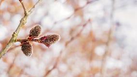 En gullig växt i skogen Arkivbilder