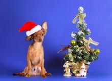 En gullig valp i en Santa Claus hatt sitter bredvid en julgran En smart julkort med ett husdjur Royaltyfria Bilder