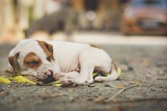 En gullig valp som sover på gatan royaltyfri fotografi