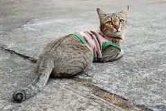 En gulliga Cat Relaxing On The Ground royaltyfri fotografi