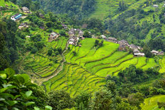 En Gurung by mellan risfält i himalayasna, Nepal royaltyfri fotografi