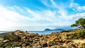 En häger på de steniga kusterna av paradislilla viken Royaltyfri Bild