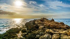 En häger på de steniga kusterna av paradislilla viken på solnedgången Royaltyfria Bilder