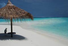 En häger på en tropisk strand. Gangehi ö, Maldiverna arkivfoton