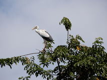 En hägerfågel står på trädet Royaltyfri Foto