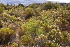 En härlig ökenplats nära Las Vegas Nevada. royaltyfri foto