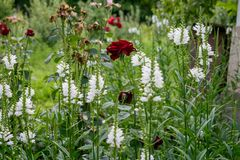 En härlig bild av en blommaträdgård på en sommardag arkivfoton