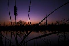 En härlig blå solnedgång över ett damm med cattails silhouetted i förgrunden Arkivfoton