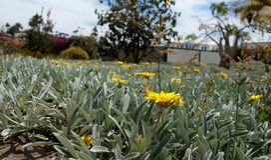 En härlig blommaäng i Gran Canaria Fotografering för Bildbyråer