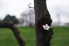 En härlig blomma som blommar på vårträd royaltyfria foton