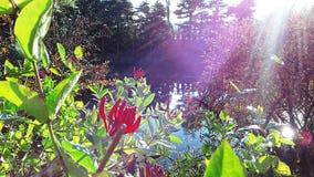"""En härlig buske blommar i höst på kusten av en sjöâ""""– 2 arkivbild"""